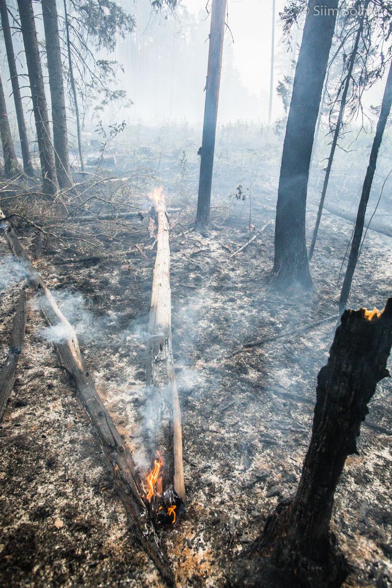 Märtsis suurenes metsa- ja maastikupõlengute arv